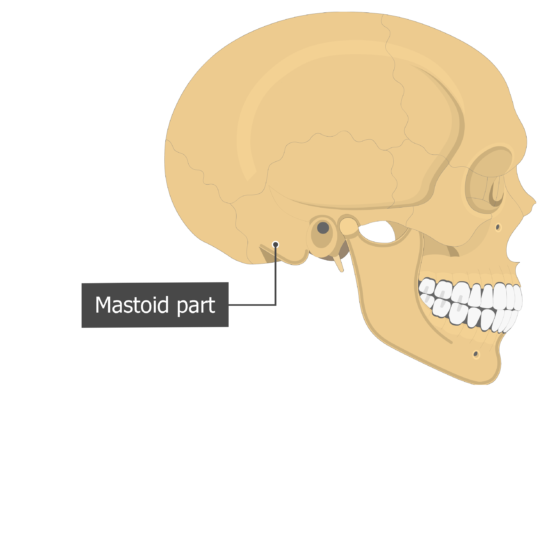 Mastoid part Temoporal bone lateral view