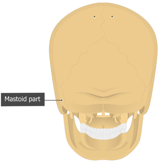 Mastoid part Temoporal bone posterior view