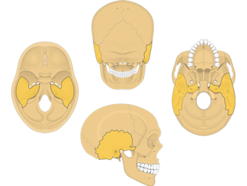 Temoporal bone overview featured