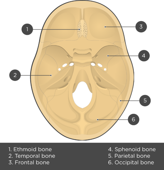 Cranial Floor - Test yourself - Answers