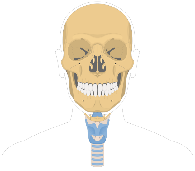 Hyoid bone overview-3