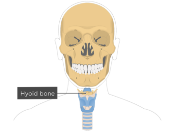 Hyoid bone overview featured image