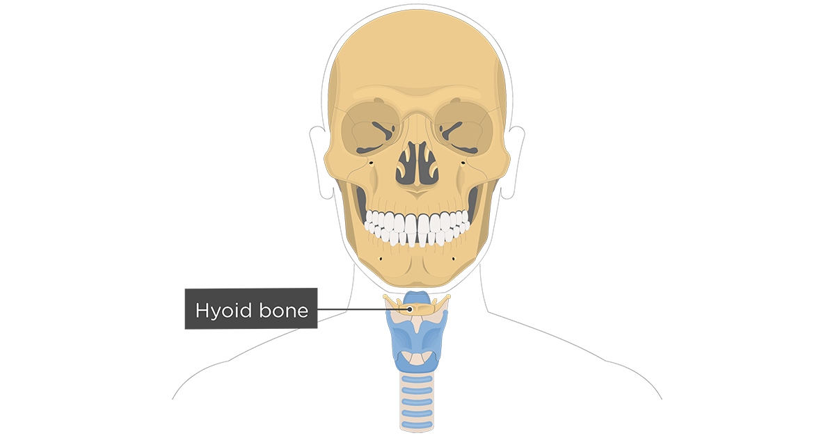 Facial bones of the Skull • Anatomy & Function