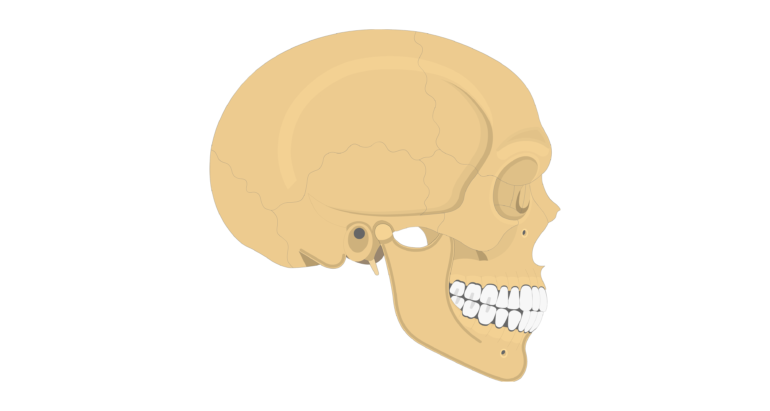 Zygomatic Bone - Lateral View