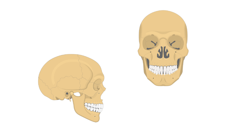 Zygomatic Bone - Overview