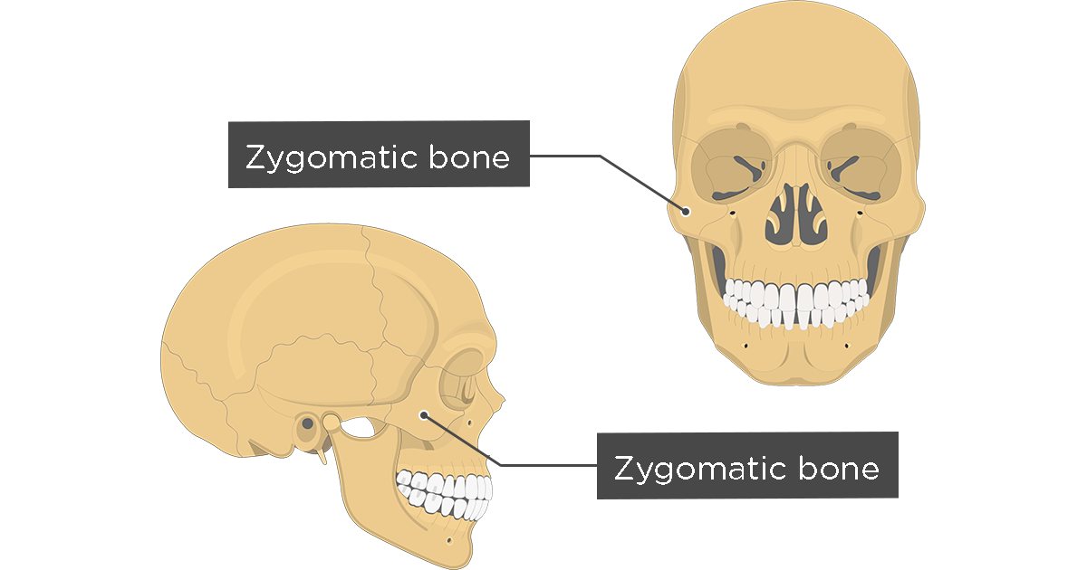 Zygomatic Bone Anatomy