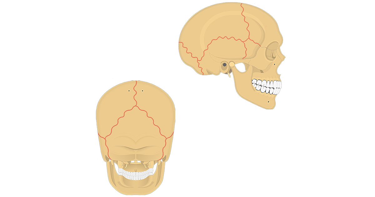 featured image - skull sutures