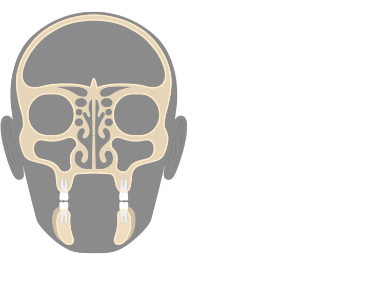 The coronal view of the frontal bone
