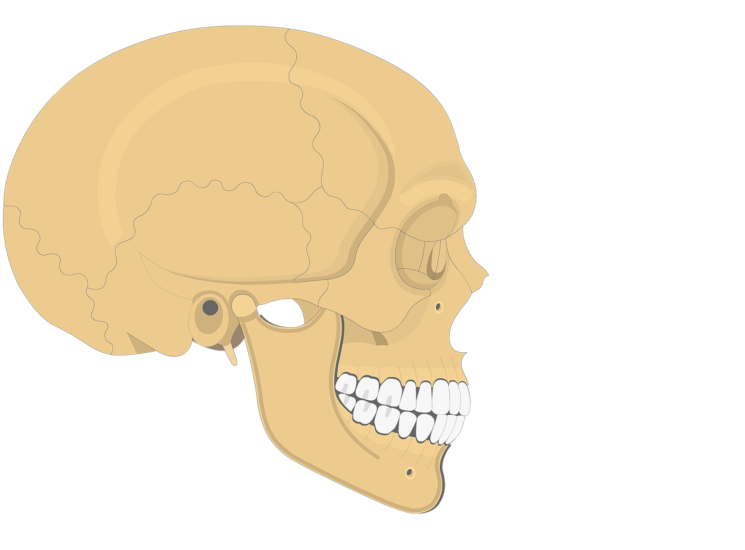 The lateral view of the frontal bone