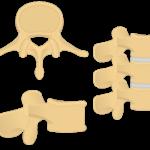 lumbar vertebrae - featured image