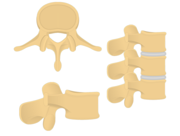 lumbar vertebrae - featured image
