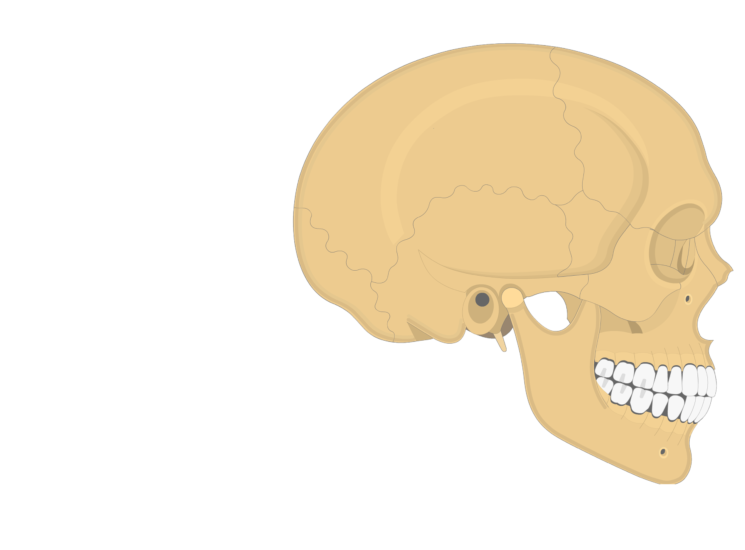 The lateral view of the parietal bone