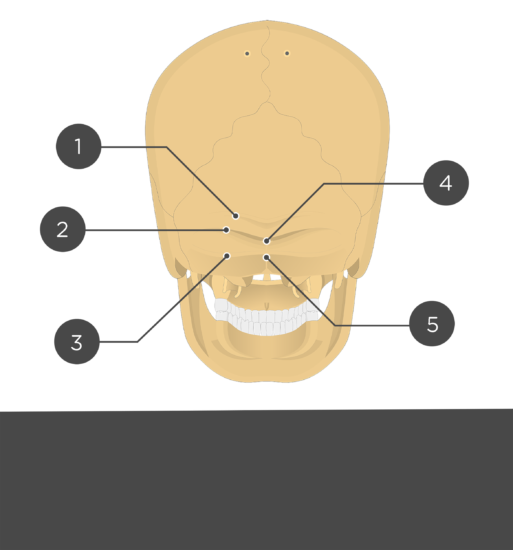 Test yourself - occipital bone posterior view