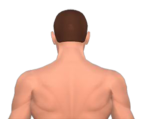 Extensions of neck vertebrae animation slide 4
