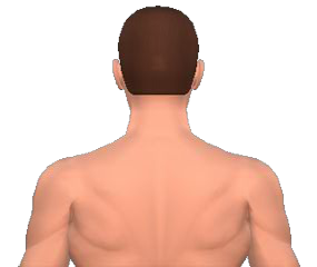 Lateral flexion of the neck vertebrae animation slide 1