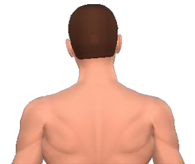 Lateral flexion of the neck vertebrae animation slide 2