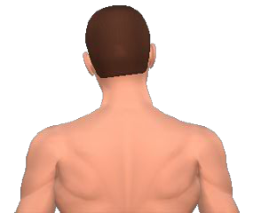 Lateral flexion of the neck vertebrae animation slide 4
