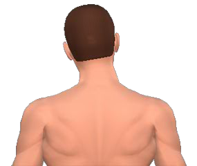 Lateral flexion of the neck vertebrae animation slide 5