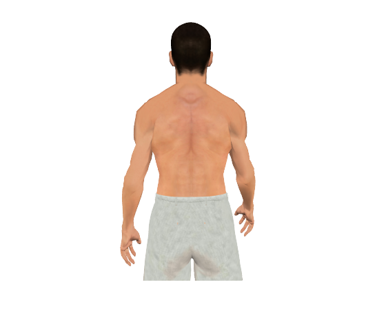 how to train latissimus dorsi muscle