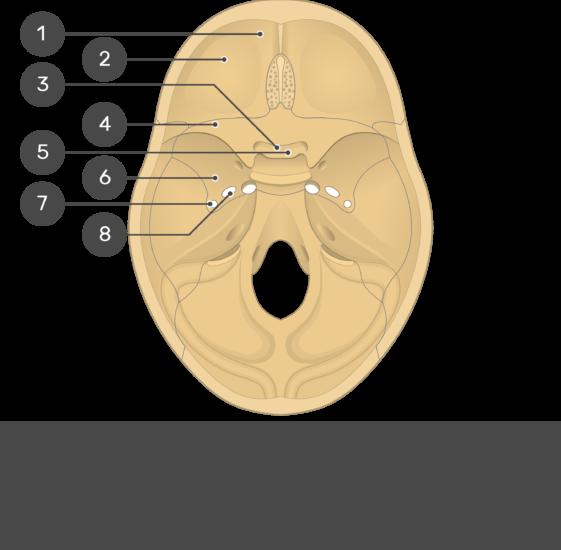 Cranial Floor - Test yourself - Part1