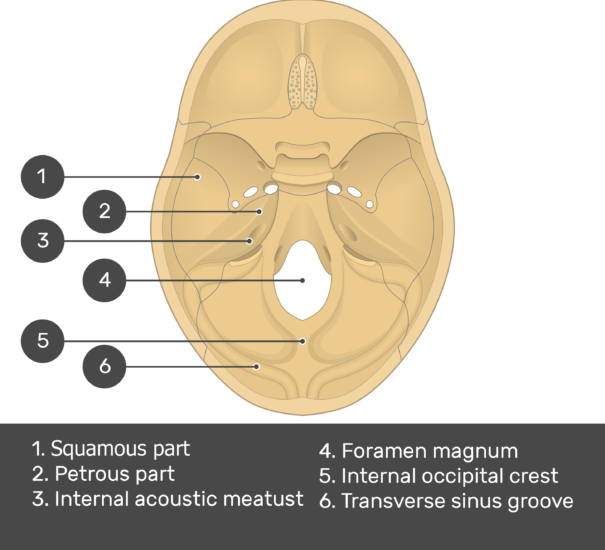 Cranial Floor - Test yourself - Part1 - Answers