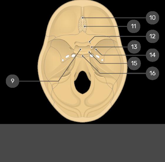 Cranial Floor - Test yourself - Part2
