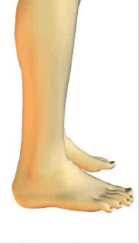 Foot eversion (1) By Extensor Digitorum Longus Muscle