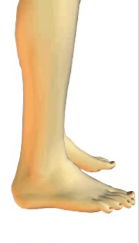 Foot eversion (2) By Extensor Digitorum Longus Muscle