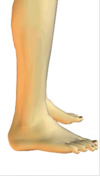 Foot eversion (3) By Extensor Digitorum Longus Muscle