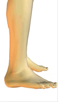 Foot eversion (4) By Extensor Digitorum Longus Muscle