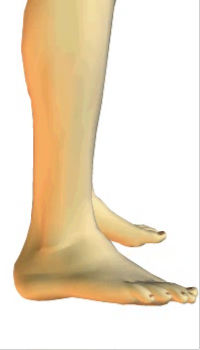 Foot eversion (5) By Extensor Digitorum Longus Muscle