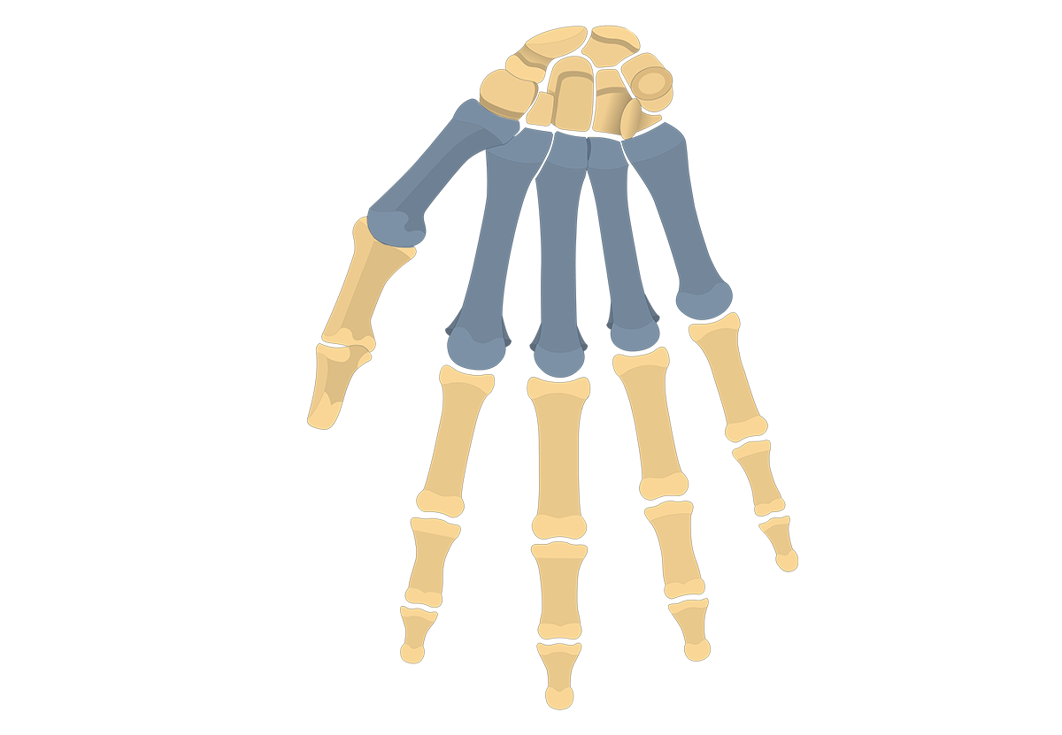 Featured image metacarpal