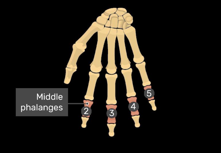 Middle: II - V