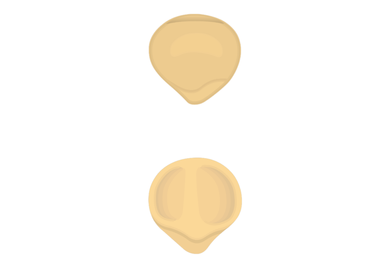 Patella Bone Anterior And Posterior Views