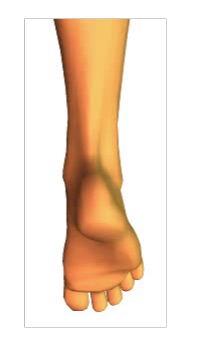 Phalangeal Flexion (2)