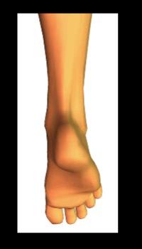Phalangeal Flexion (3)