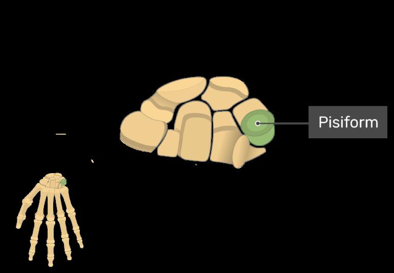 Pisiform