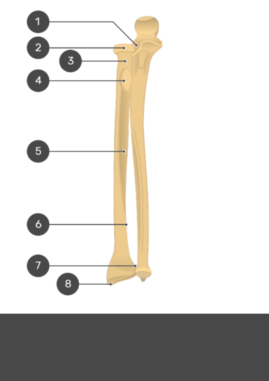 Radius and Ulna Bones - Test youreself - Part1