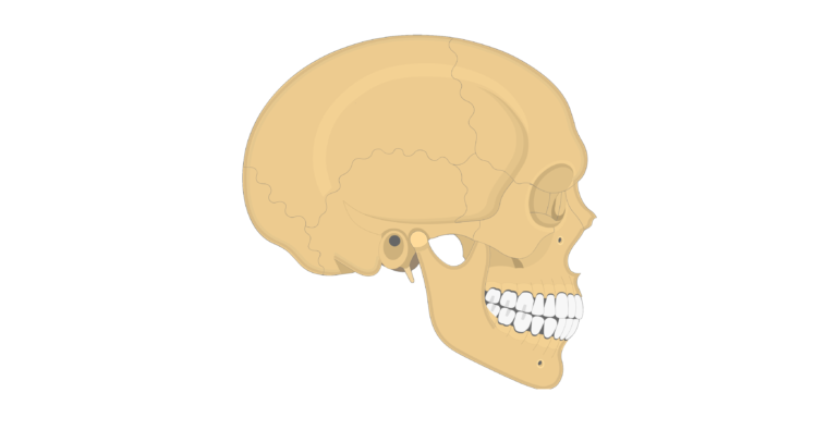 The Skull Bones Lateral View