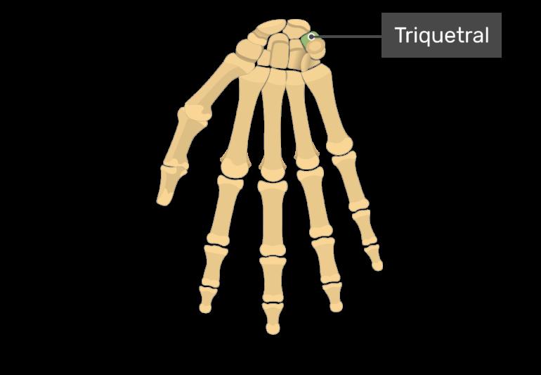 Triquetral bone