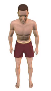 Slide 5 of the animation showing flexion of the vertebral column (torso).