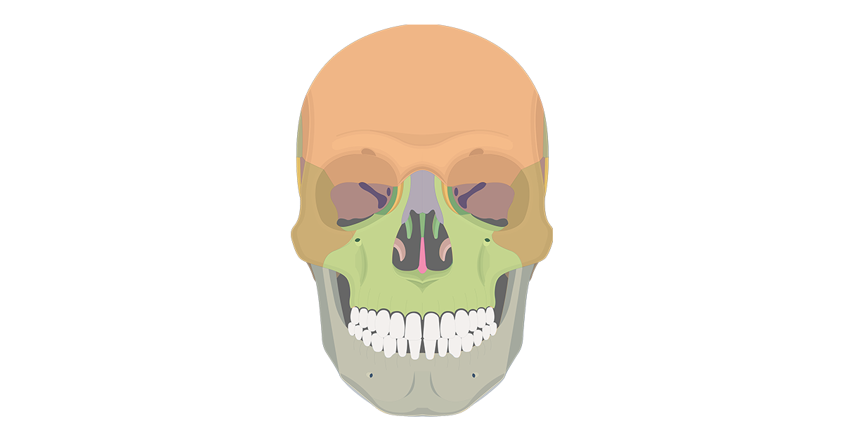 anterior skull bones - featured image