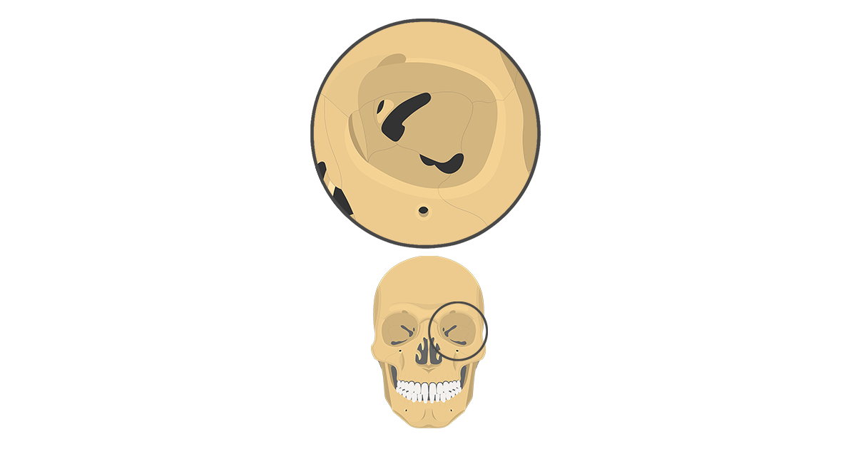 Skull Bone Markings - Orbital View