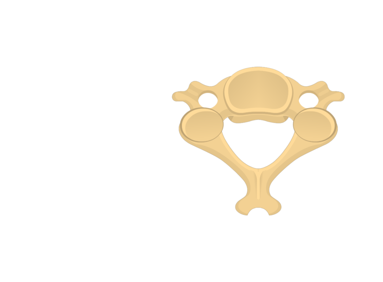 Unlabelled image of the superior view of a cervical vertebra