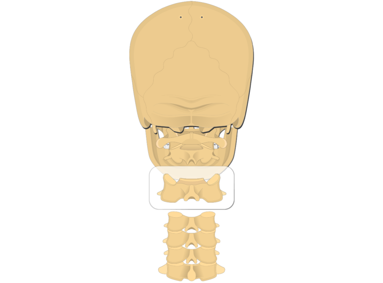 Cervical vertebra animation slide