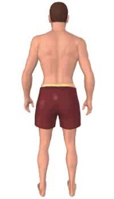 First image in animation, of figure with thigh in anatomical position.