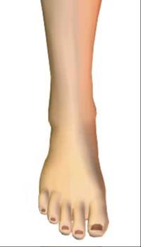 Foot inversion (2)