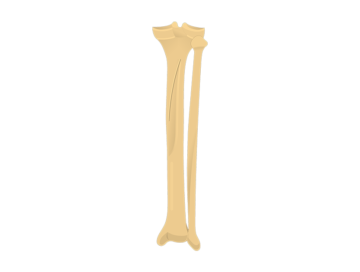 posterior tibia fibula - featured image