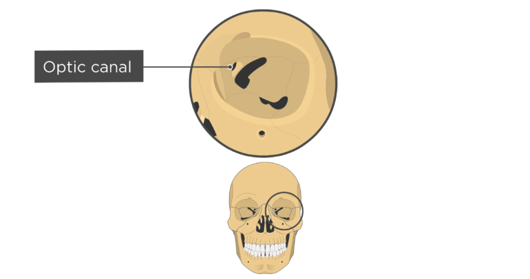 skull bones markings - orbital view - optic canal