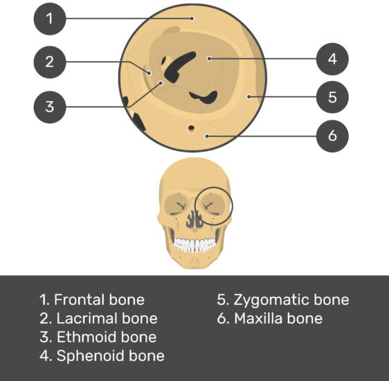 skull bones - orbital view - test yourself - answers